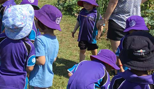 Preschoolers go bush in pilot program